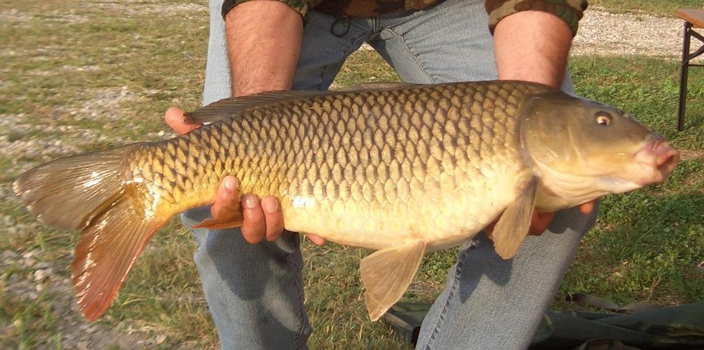 GIAKKERO pesca Carpa regina kg 6,410